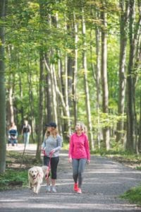 dog walkers and hikers