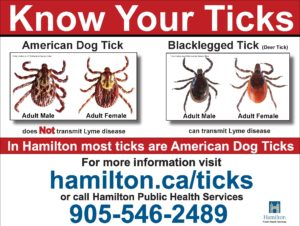 Ticks & Lyme Disease