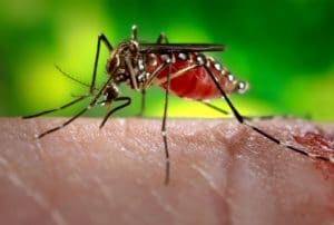 West Nile Virus in Hamilton
