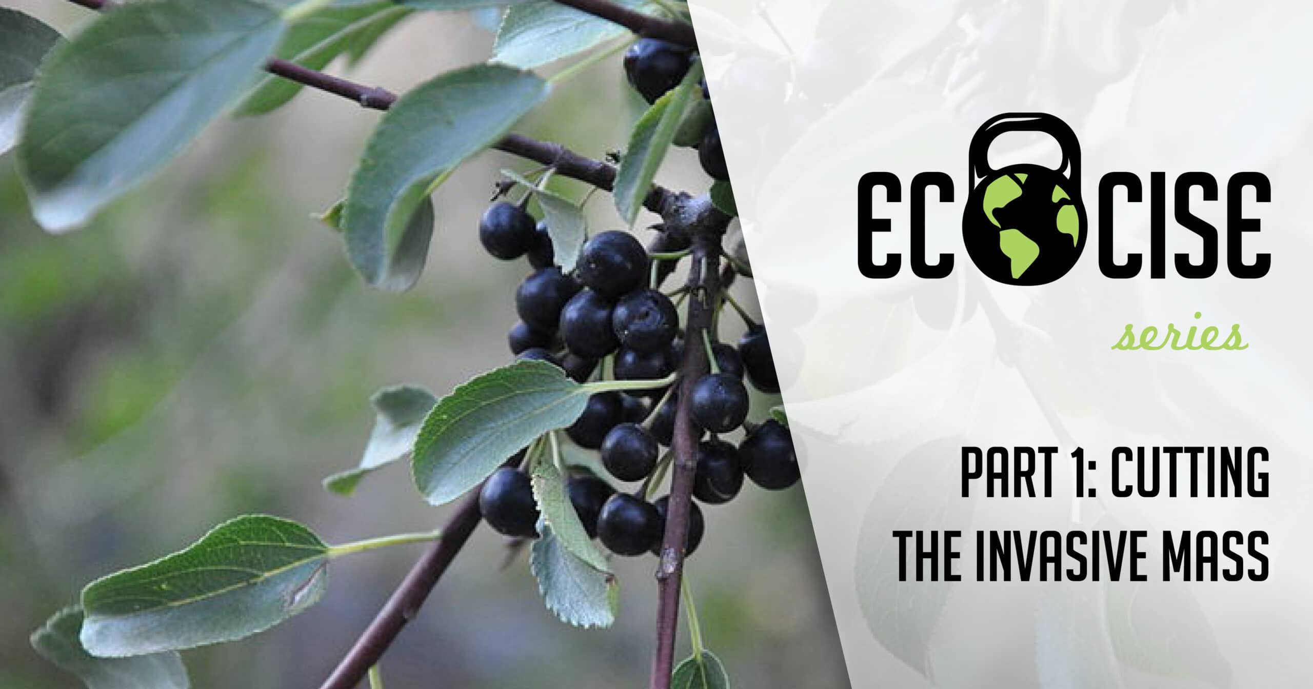 Ecocise! Part I: Cutting the Invasive Mass