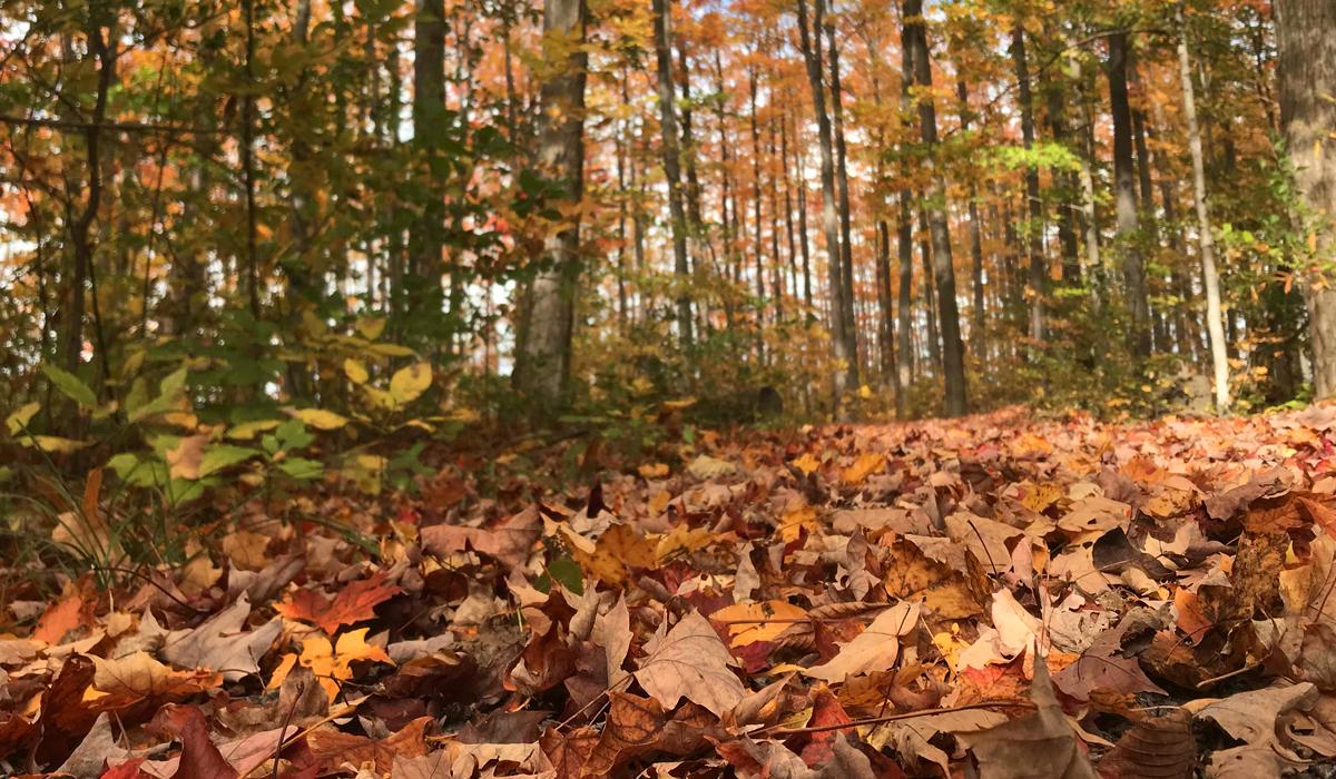 Leaves blog